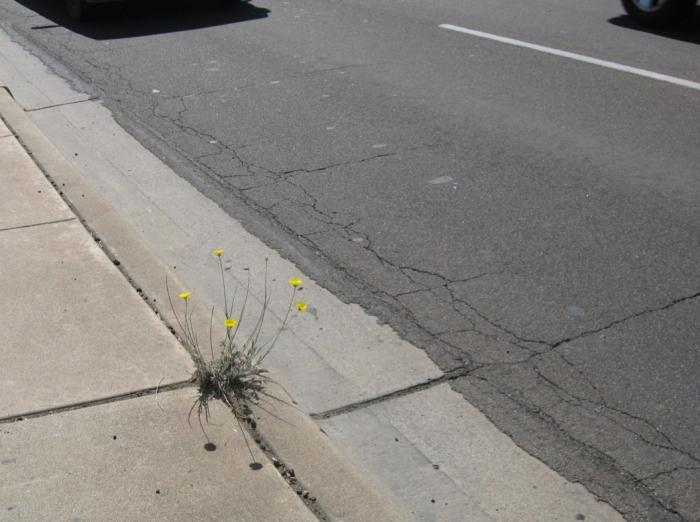 Flower by street